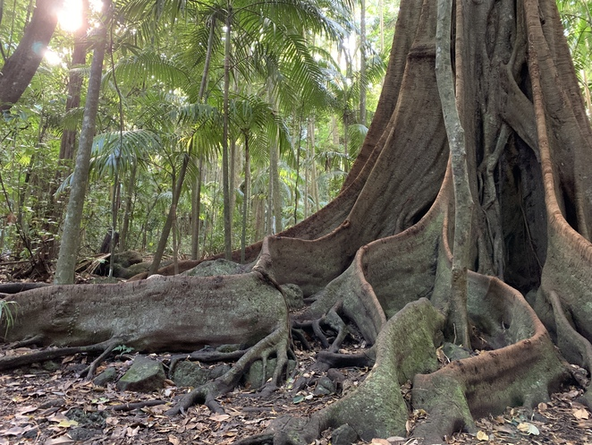 Witches Falls Circuit Hike in Tamborine Mountain, Queensland, Witches Chase Trail, Tamborine Mountain, Palm Grove section Hike, The knoll Section Hike, Joalah Section Hike, Spice of Life Café in Tamborine,