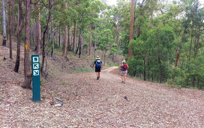 Walk the forest trails from Bellbird Grove to Camp Mountain Lookout