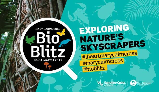BioBlitz, Mary Cairncross Scenic Reserve, Maleny, March to August 2019, Rainforest Discovery Centre, Listen Up,Cairncross QuestaGame, Junior Ranger Challenge, Every Pademelon Counts, Forest Feedback, Botanical Impressions, Jinibara Talking Circles, Nature Journaling, Insects in the Night Light, Bat Detective Night, Biodiversity: That's Life exhibition