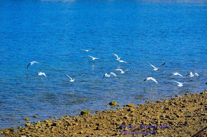 birds, flight, port adelaide, water