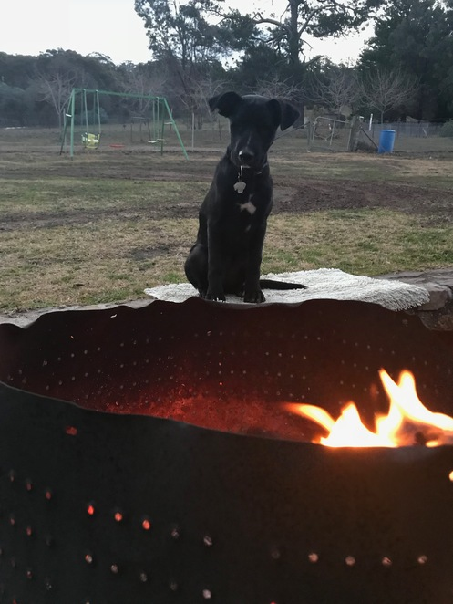 family friendly, dog friendly, fire pit, open fire, dogs, fenced, activities for families, friends