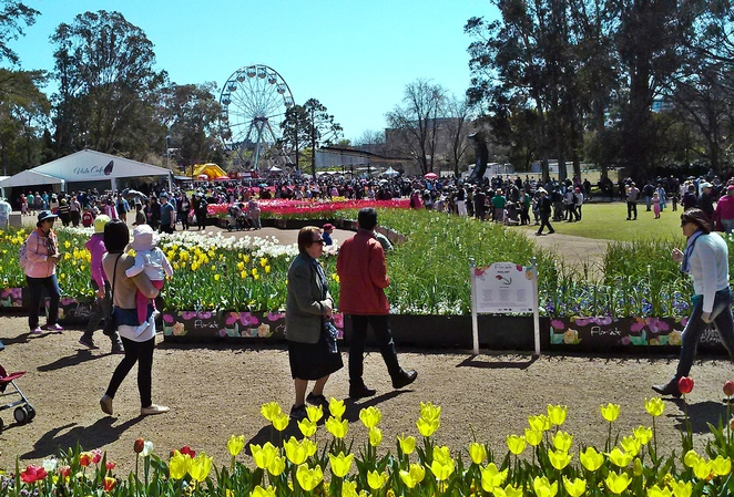 floriade, events, canberra, 2017, festivals, events, ACT, family, flowers, canberra, what to do