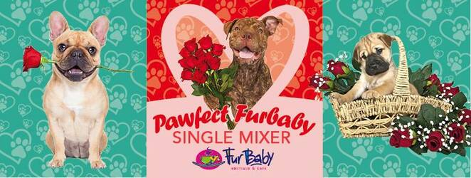 fur baby cafe event, things to do with your dog, valentines day in perth, dog friendly events in perth