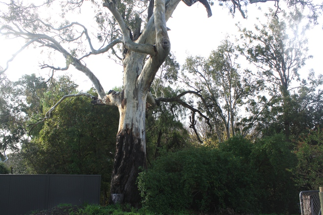 What is your favourite tree? – Photo Jenny Esots