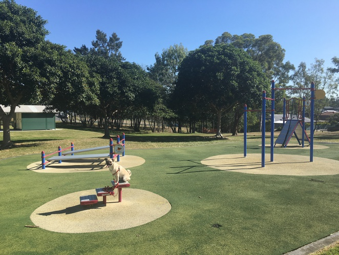 park, dog park, dog, dog friendly, perth street park, camp hill, seven hills, brisbane, southside, free, children, fun, playground