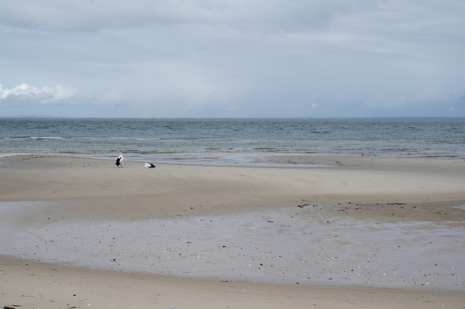 Pelicans on Red Beach