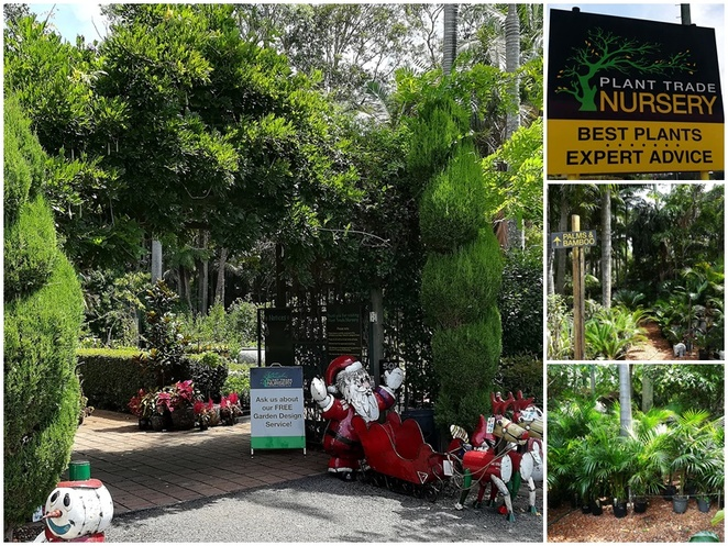 plant trade nursery, plants, gifts, trees, palms, ferns, NSW, port stephens, landscaping, nelson bay, where to buy plants, where to buy trees, nelson bay road, bobs farm,