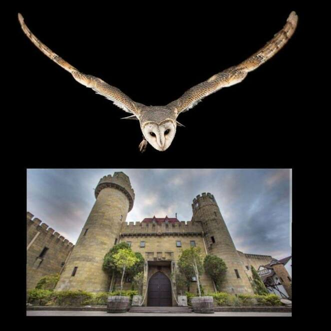 A Knight with Owls, magic, Sunshine Castle, Bli Bli, Raptor Vision, rehabilitation of birds of prey, Castle Courtyard, tickets pre-purchased, dress warmly, Castle Bar and Cafe open, unique location