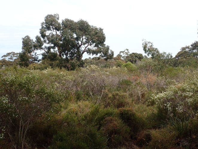 Balcombe Park, Beaumaris, reserve, nature, walks, sports oval, heathland, nature, wildflowers, orchids, Bayside, native plants