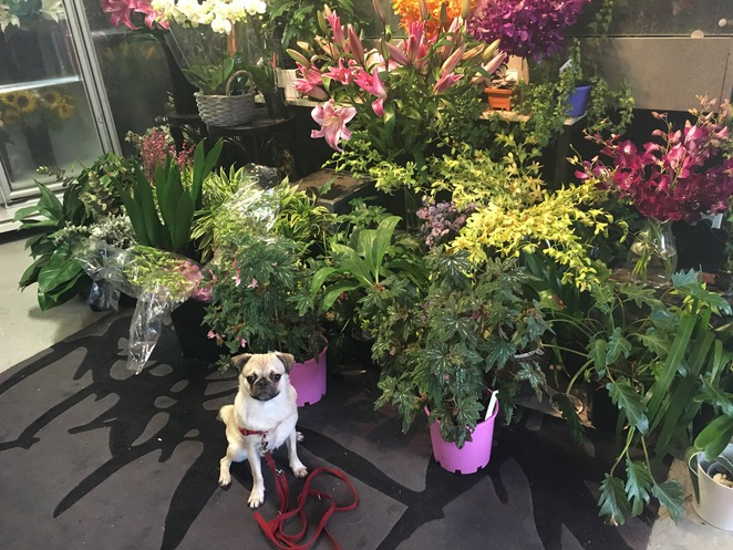 best florist and espresso bar, florist, espresso, coffee, flowers, drinks, bar, dog friendly, mt gravatt, southern suburbs, brisbane, southside, cafe