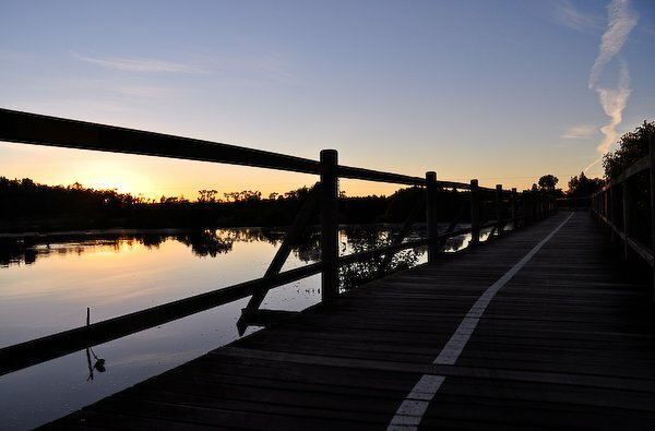 Cycle or walk along boardwalks over the mangroves at Boondall Wetlands