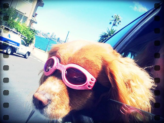 dogue cremorne dog grooming services accessories kennel day care