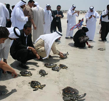 Turtles released in the ocean