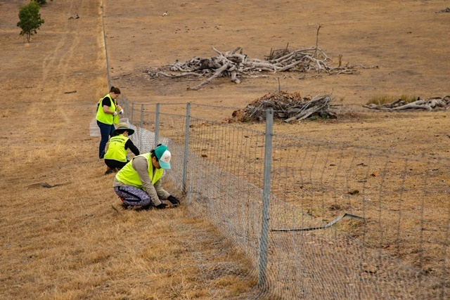 fixing,fencing
