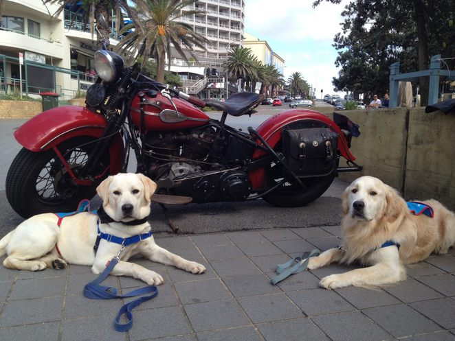 Hogs For Dogs at North Cronulla
