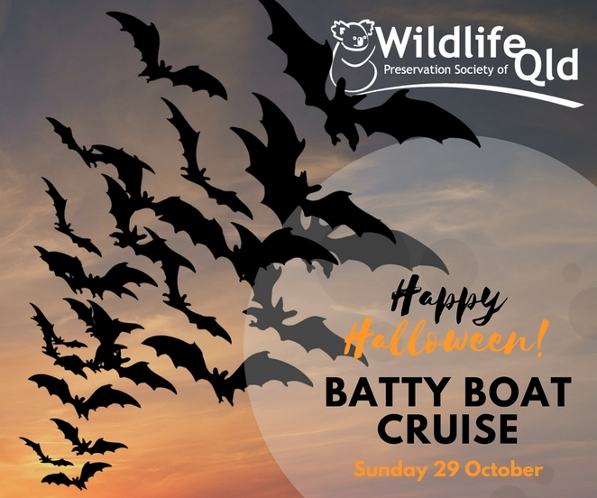 Join the Batty Boat Cruise