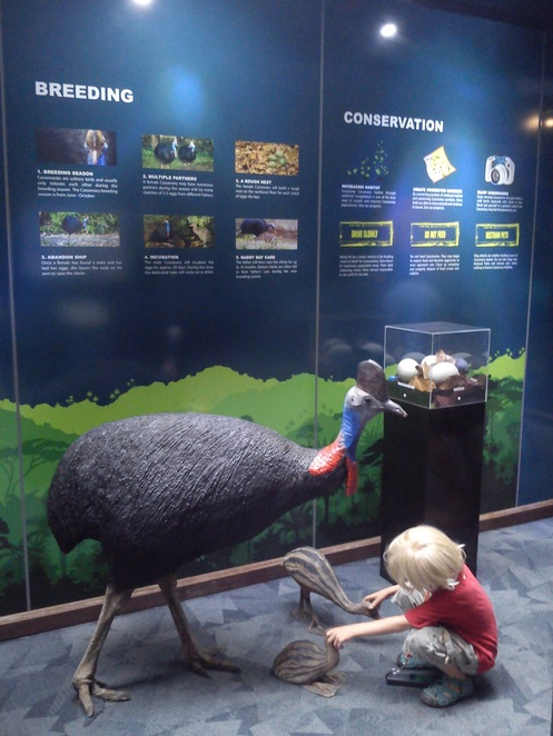 rainforest discovery centre, Daintree rainforest, things to do near Cairns, family friendly, far north queensland