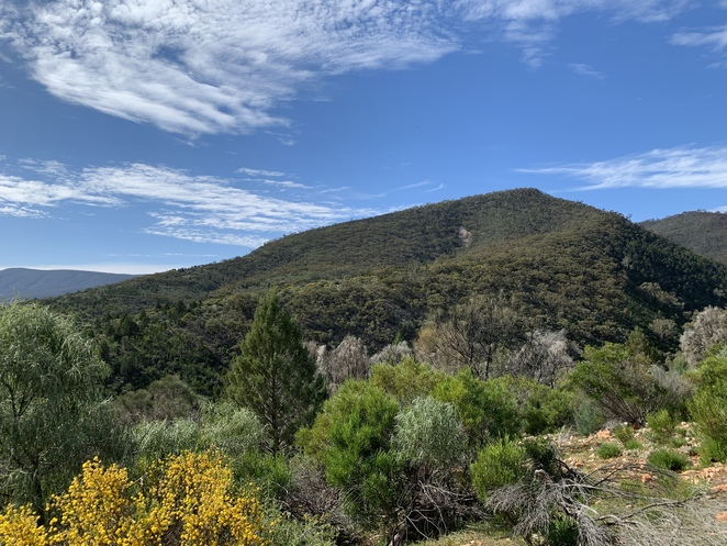 View from Daveys Gully Hike