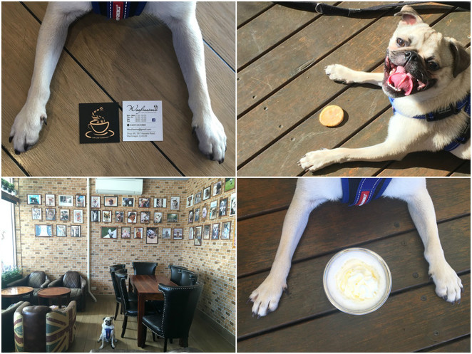 woofissimo, dog friendly, cafe, macgregor, brisbane, southside, dog treats