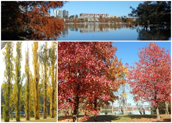 autumn, canberra, seasons, whats on, things to do, events, festivals, parks, autumn leaves,