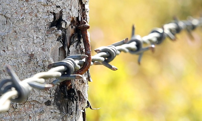 barbed wire, fence, camp, internment, danger, prison,