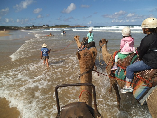 Camel Riding, Shoal Bay, Port Stephens, Nelson Bay