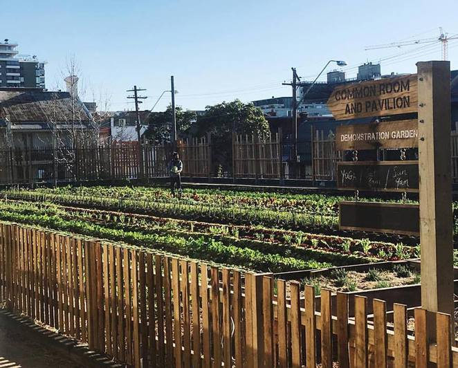 Camperdown Commons, Acre Eatery, Restaurant, urban farms, child-friendly, fresh produce, sustainable food