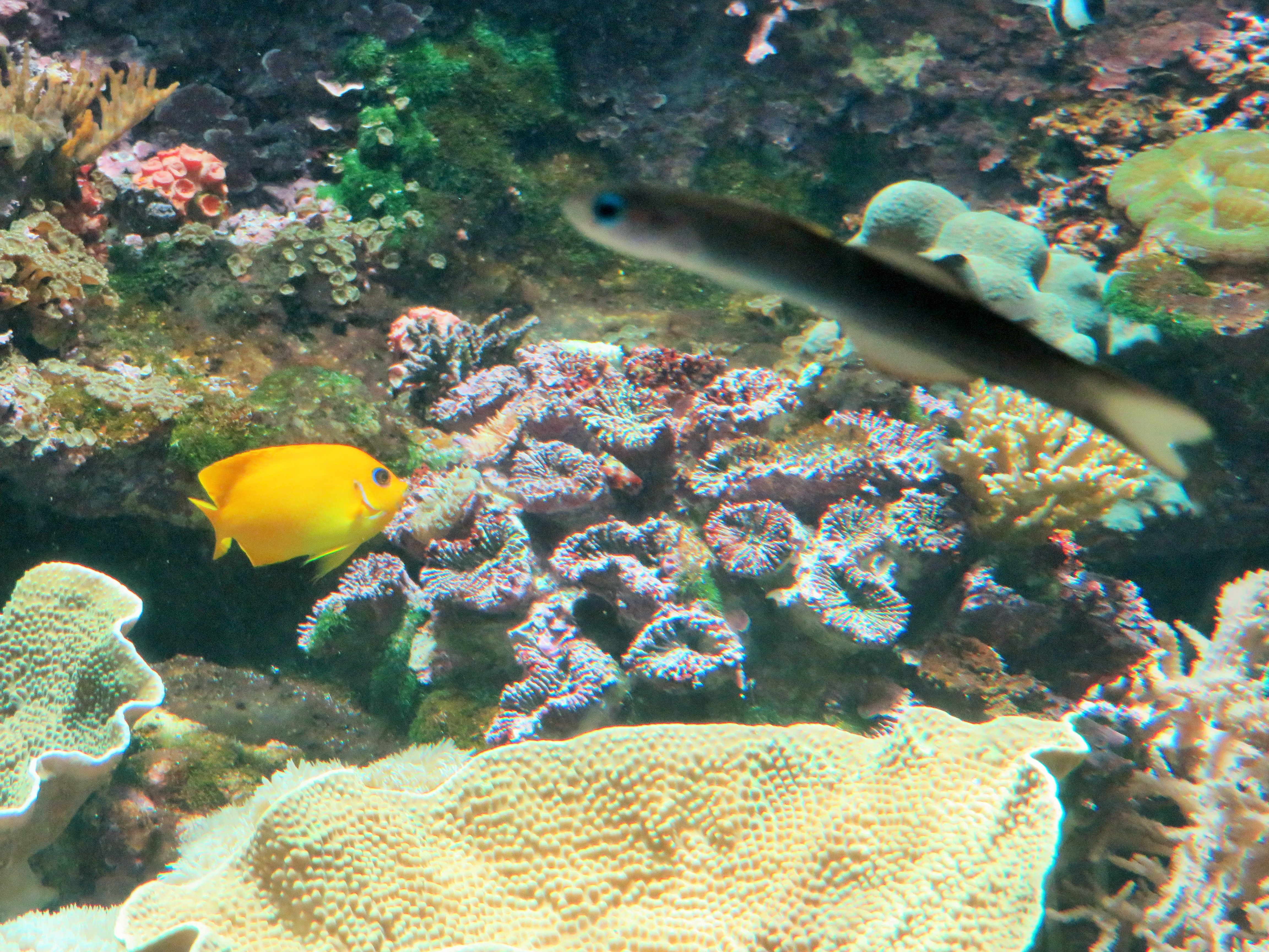 Reef hq the great barrier reef aquarium townsville for Reef tank fish