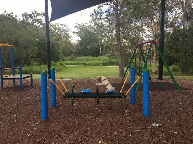 holmead park, eight mile plains, southside, southern suburbs, dog park, brisbane, free, park, playground, walking track, bikeway, bulimba creek, nature, exercise, outdoors