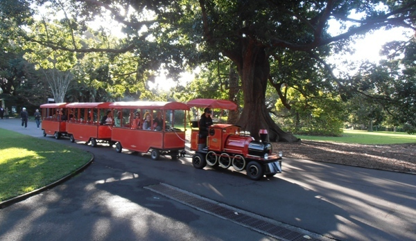 The miniature train at the Royal Botanic Gardens is always a hit with the kids!