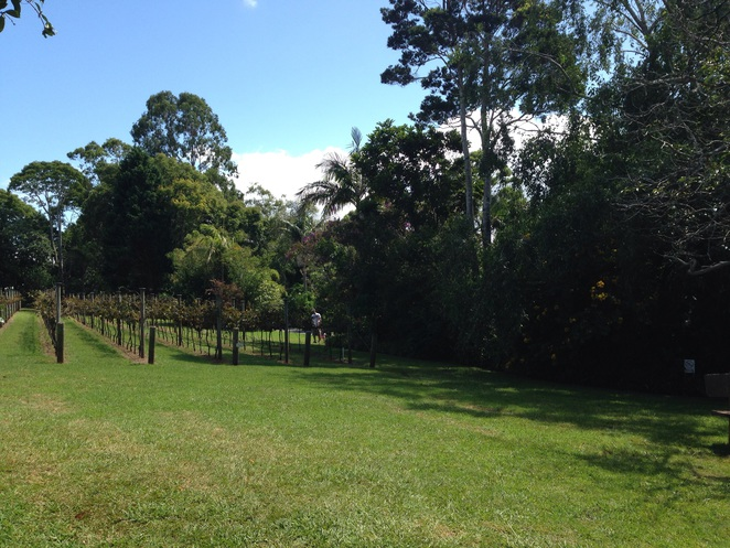 Mount tambourine, winery, witches falls winery, wineries on the Gold Coast, day trips, wine, Gold Coast wine
