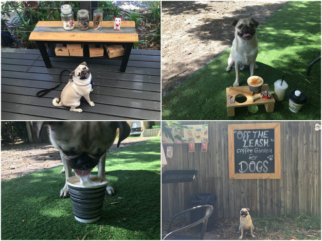 our place coffee garden, victoria point, off leash dog park, cafe, dog friendly, dog treats, brisbane, park