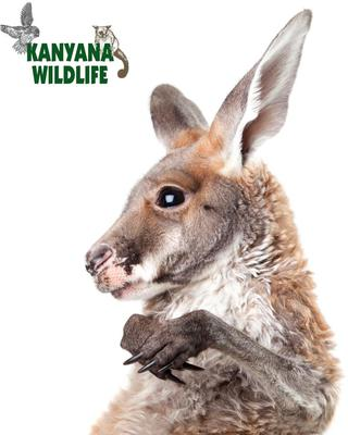 This image is from the Kanyana Wildlife Rehabilitation Centre website