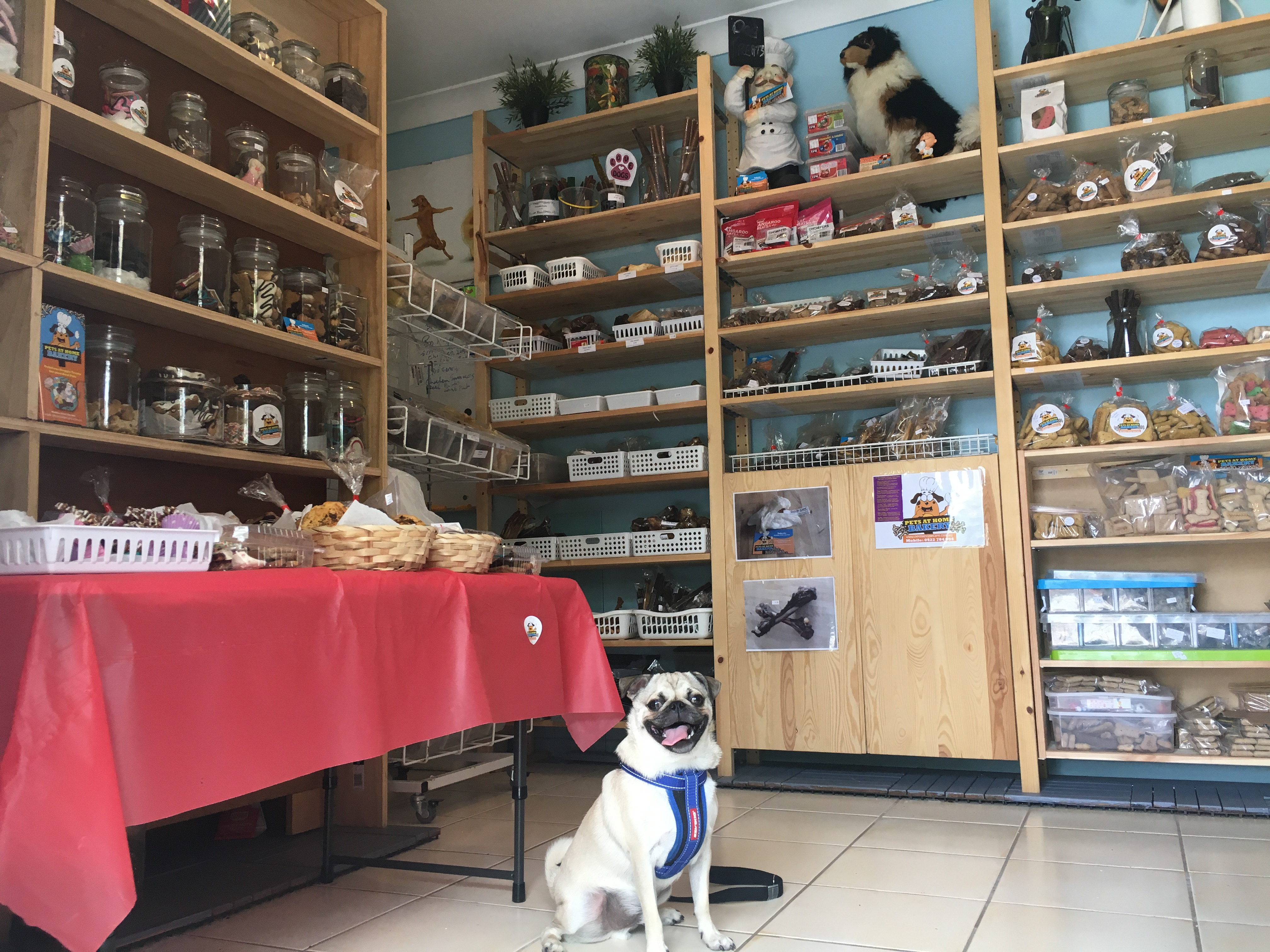 Pets at home business model