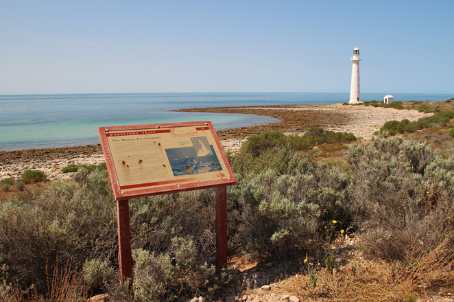 South Australian wildlife, South Australian tourism, Wildlife photography Wildlife stories, Whyalla, Freycinet trail SA, Point Lowly lighthouse