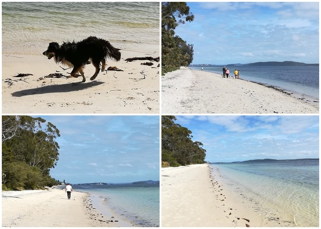 bagnalls beach, nelson bay, NSW, port stephens, dog walking beaches, best beaches in port stephens, dog friendly, places to take dogs, corlette, nelson bay, bagnalls, dogs, dog walking, beaches,