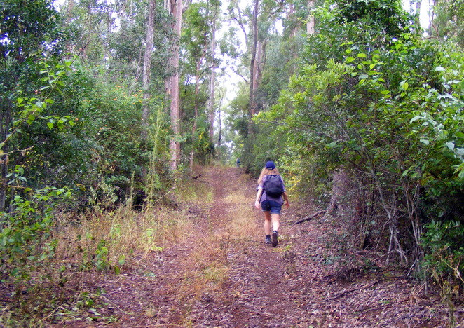 Hiking up Black Soil Road for fitness
