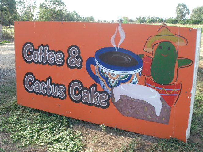 cactus,cacti,mexican,cake,coffee,sign,country