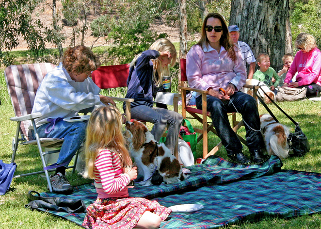 Cavalier King Charles Spaniel, Cavalier Capers, funday, family, spectators, day out