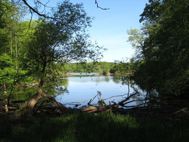 Cootes Paradise, nature trail, wetlands, bird sanctuary, day trip, nature, canoeing,