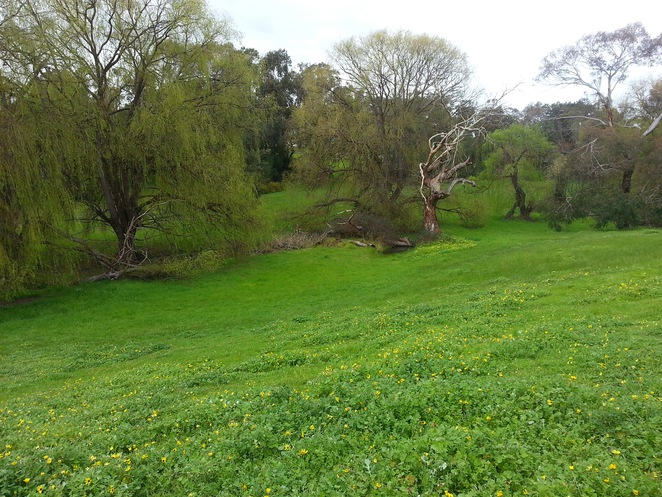 Edsall Reserve, Wallington, Bellarine Peninsula, Bellarine Highway,