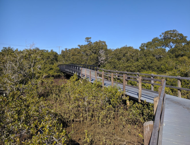 Lota Creek Boardwalk