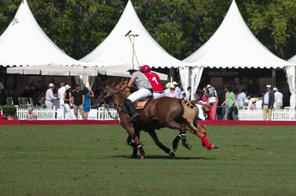 Melbourne Albert Park Polo Horse Horses Horse & Rider Fast-Paced Sport Spectacular