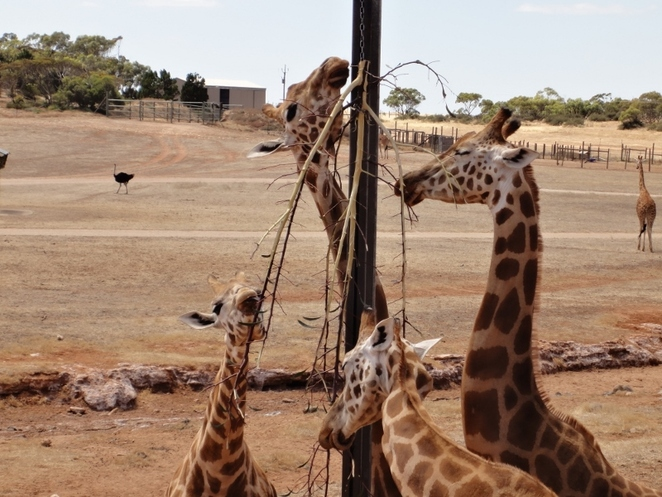 More Than Just Delicious - Adelaide Zoo Animal Diets, Adelaide Zoo, Adelaide