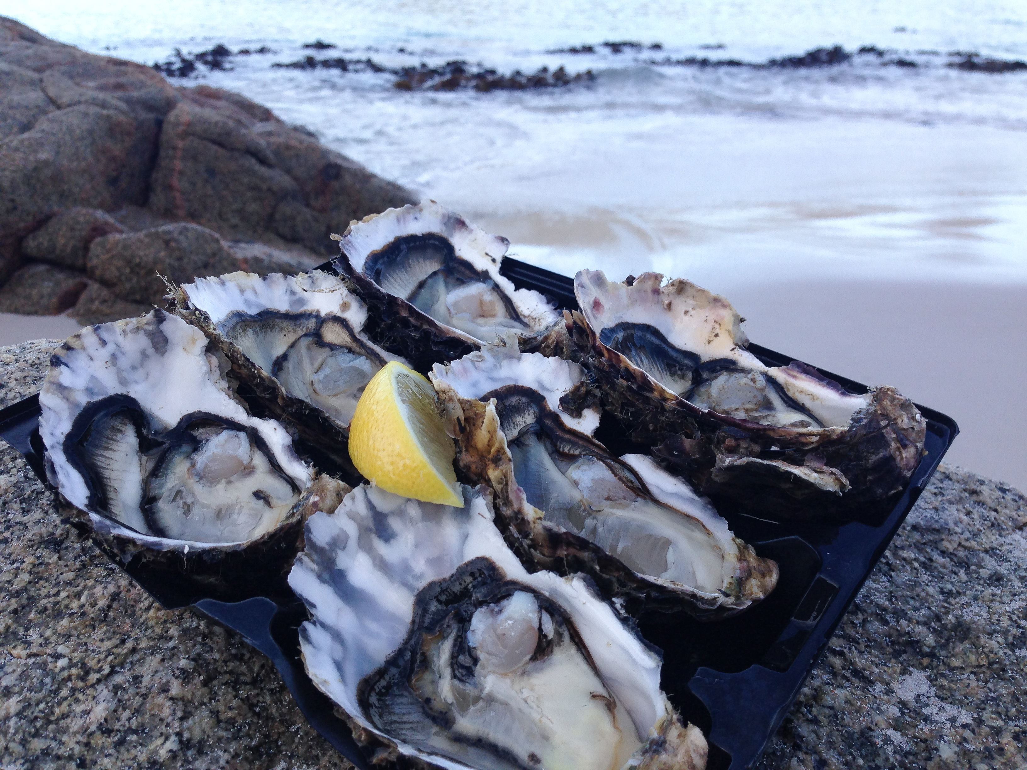 Wineglass bay oysters