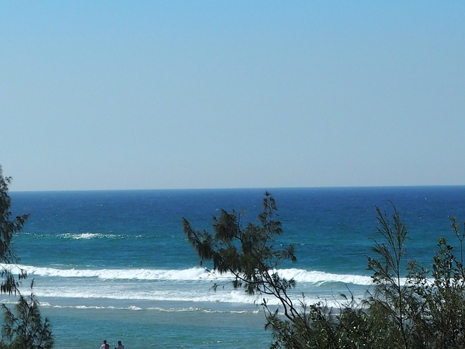 whales, ocean, Tweed, Gold Coast, dolphins,