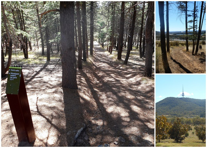 himalayan cedar forests, oak forests, canberra, national arboretum, walking trails, bush walks, short walks