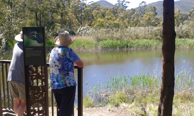 platypus, the sanctuary, canberra, tidbinbilla, ACT, national park, walks with prams,