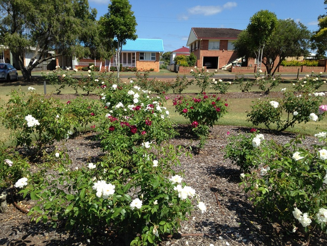 Roses, Gardens, Parks, Maryborough, Heritage