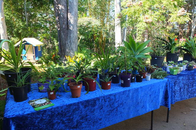 Sunshine Coast Forest Market, Buderim, Bloomhill Cancer Care, lush green rainforest, tranquillity, serenity, unbusyness, once a month, stallholders, fresh produce, plants, flowers, hot food, deli items, beverages, healthy living and wellness, local artisans, sustainable, recycled, vintage, pre-loved, kids playground and creative space, on-site cafe, entertainment, shuttle service, local-for-purpose charity, all-round winner, new up and coming market